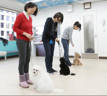 犬の社会化・しつけ教室